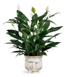 FTD Comfort Planter from Lloyd's Florist, local florist in Louisville,KY