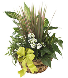 FTD Village Square Planter from Lloyd's Florist, local florist in Louisville,KY
